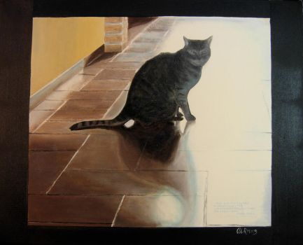 cat between light and shadow by martaraff