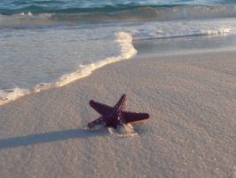 Destin Starfish by saskya