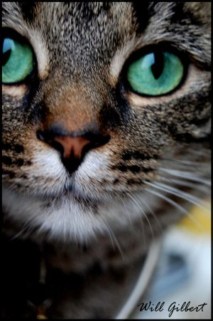 Cat  s Eyes by AFireOutsideMe - Kedi Severlere