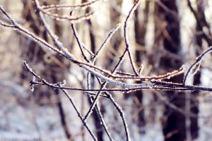 Random frosty twigs by rosaarvensis