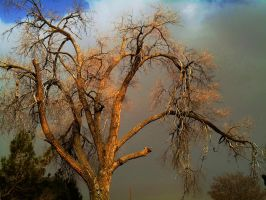 Sand Storm And The Old Tree by SharPhotography