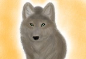 Realistic Wolf :3 by AliceinkittyLand