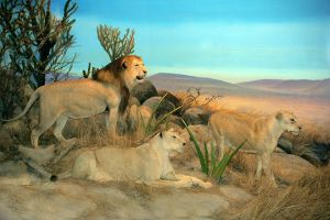 Lion Family 2 by oxygun