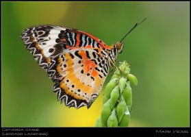 BSP Butterflies 060708 V by log1t3ch