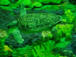 turtle stock 05 by hp-abrasion