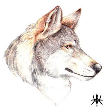 Realistic Wolf Head by vivadawolf