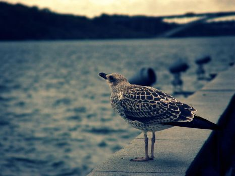 Seagull by TiredMe