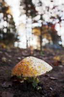 shrooms in the Fall by right-angle