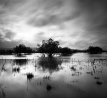 Wetlands by DannyBravissimo