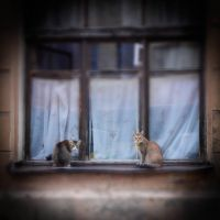 Urban cats know a lot of stories by ViktoriaGloriam