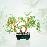 Bonsai by beads-poet