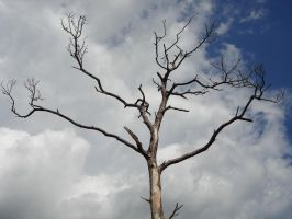 Dead Tree and Ominous Clouds 2 by steveclaus