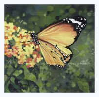Monarch Butterfly by Acacia13