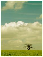 Just A Tree by JeanFrancois