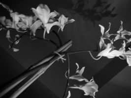 Shadow Orchids by javakills