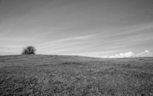 Fort Hill 2 Black and White by RachelDS