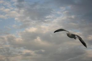 the gull by bhdrg