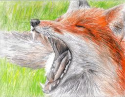 The Yawning Fox by coonotafoo