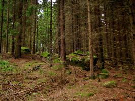 Troll Forest of Tanum by ThoughtMemory