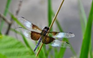 Dragonfly on a Stick by rongiveans