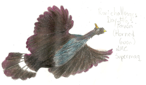 Doodle#6Pavon horned guan by Supermacaquecool