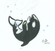 Curled Orca by HavocWraith