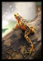 Panamanian Golden Frog Leg by charfade