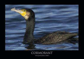 CORM.1 by THEDOC4