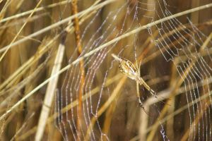 Spider by FallowpenStock