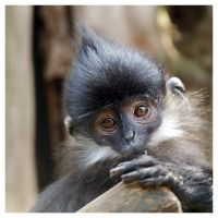 Monkey portrait by aleania