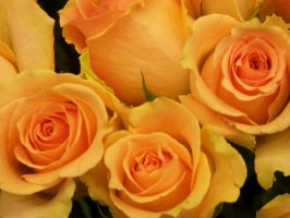Yellow Roses by Stolte33