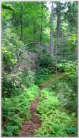 Road Prong Trail 084 by slowdog294