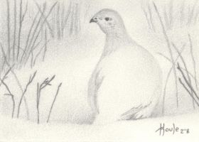 ACEO Snow Shadows - Ptarmigan by HOULY1970