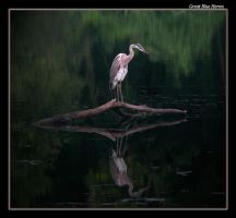 Great Blue Heron 08 by boron