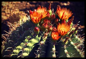 Cactus_09 by fuamnach