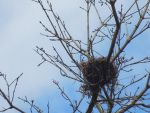 Bird's Nest by dysphoriah