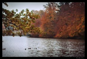 An autumn day at the Pfaffenwaldsee by ArkanumTenebrae