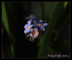 Forget me not by Azraelia
