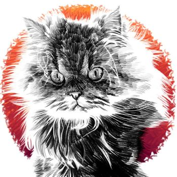 Angry cat by hamdiggy