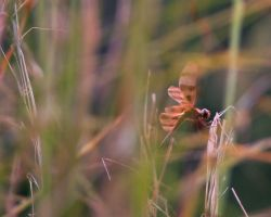 Dragonfly in the grass by skilly007