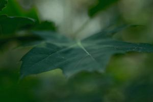 leaves3 by habili-and1