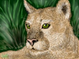 Mountain Lion by neecolette