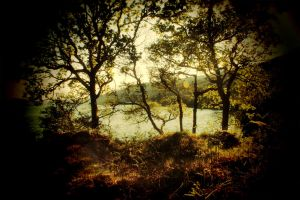 Forest overlooking Loch Long by vzzzbux