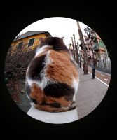 Fish eye cat by bizzara