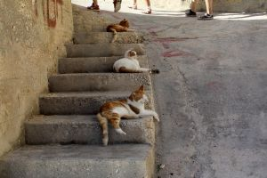three cats on a stair by panter-mis