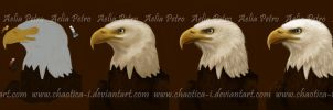 Bald Eagle WIP Series by Chaotica-I