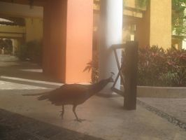 Pavo Real 2 by Dishdude87