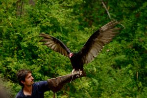 Raptor Center 117 by DarkBeforeDawn23