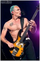 Flea, Red Hot Chili Peppers by lizzys-photos