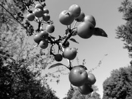 Berries in Black and White by tracy-Me